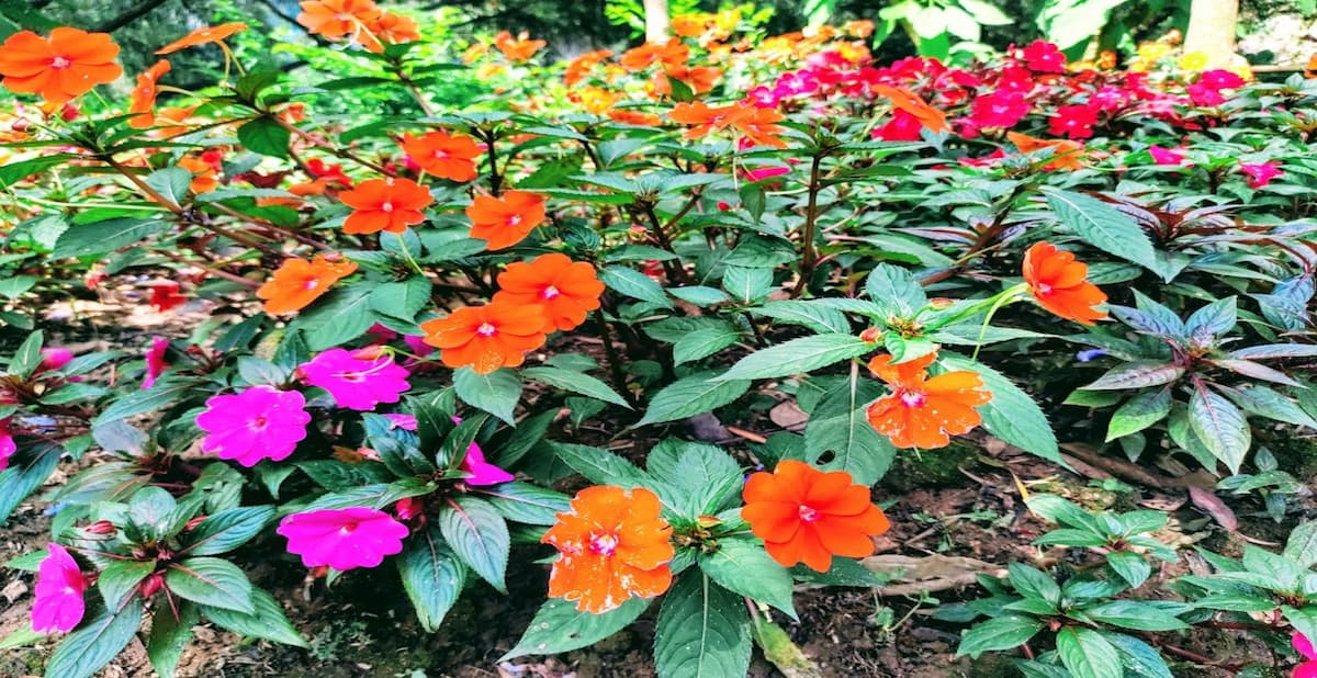 camly滝のお花